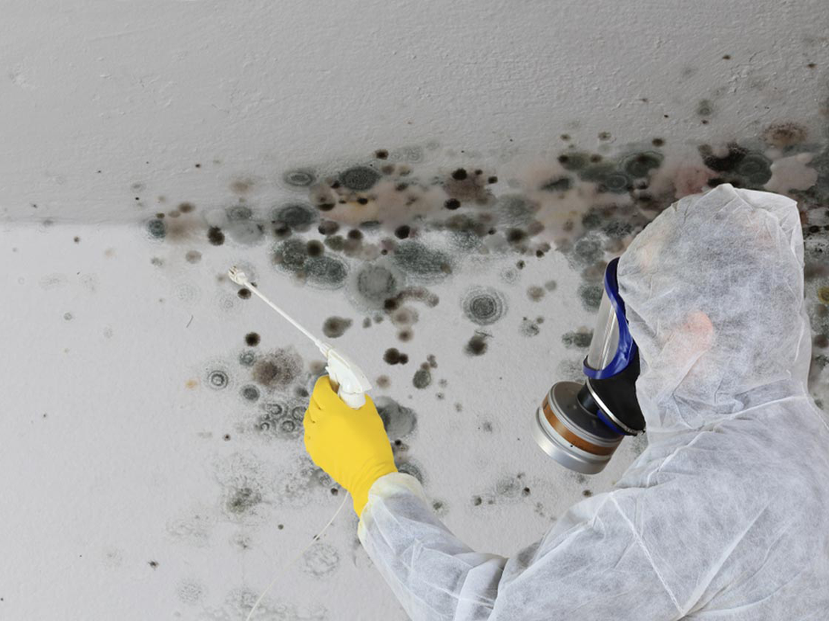 Mold inspection specialist in Houston