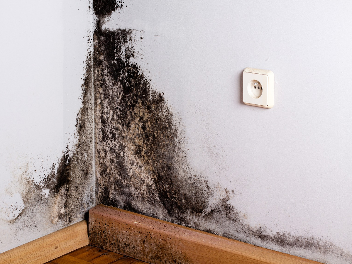 mold removal in walls